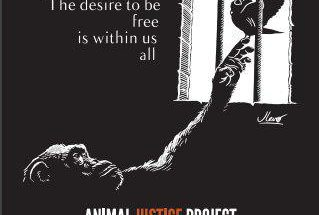 حمایت از حیوانات
